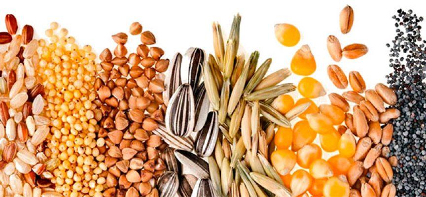 INIAF certificó más de 109.000 toneladas de semilla en 2017
