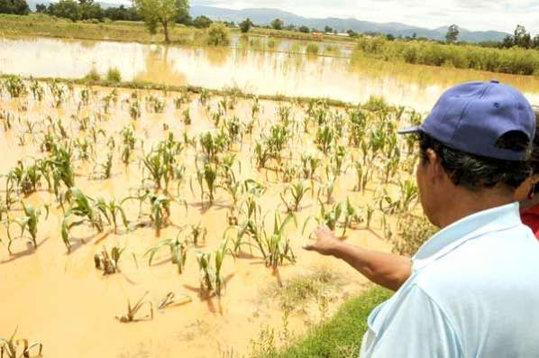 Seguro Agrario indemnizará Bs 15 millones a productores que perdieron cultivos por desastres