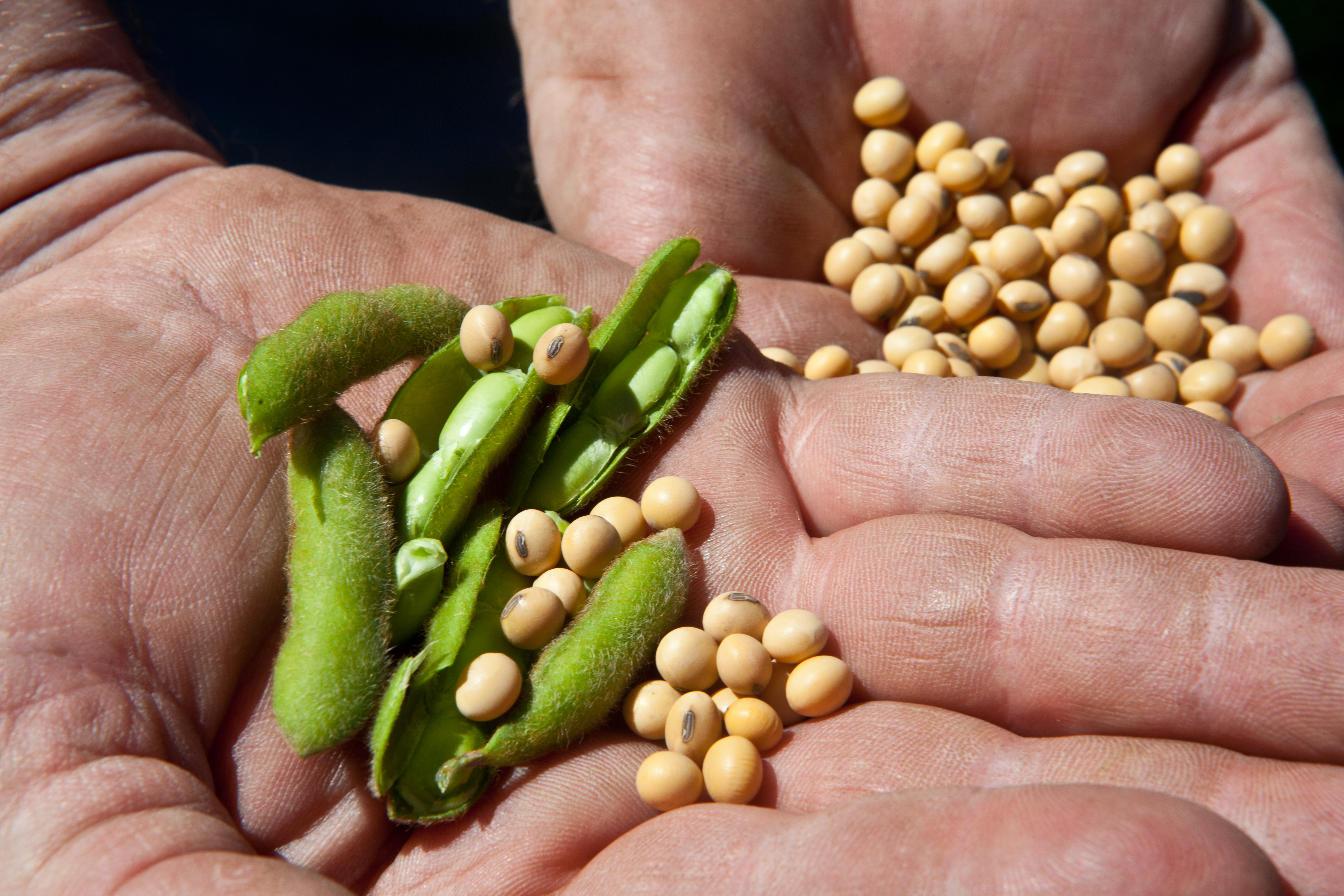 Agro da plazo de 72 horas al Gobierno para liberar la exportación de soya
