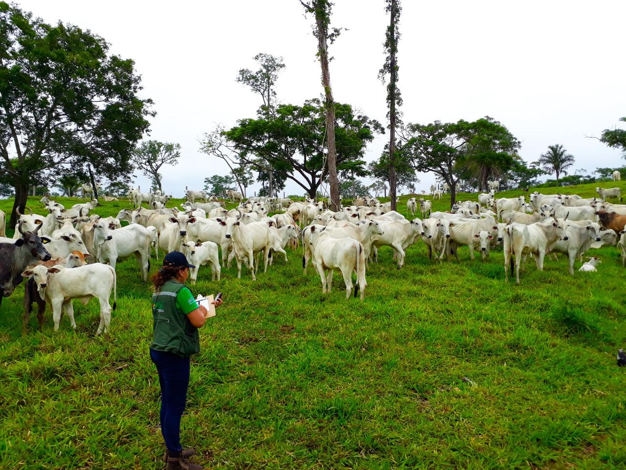 Gobierno verifica producción de alimentos y restitución de bosques en Santa Cruz