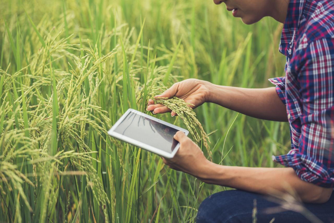 AgriHack Virtual premia emprendimientos para impulsar la agroindustria