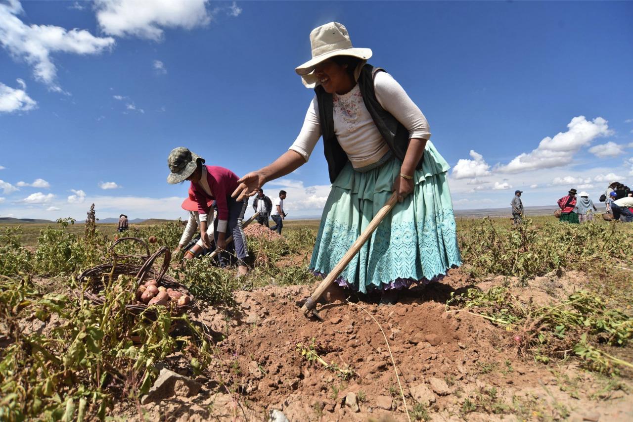 El 92% de las unidades productivas en Bolivia pertenece a la agricultura familiar