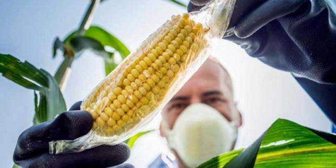 Empresarios agropecuarios rechazan recurso legal contra el uso de semillas transgénicas