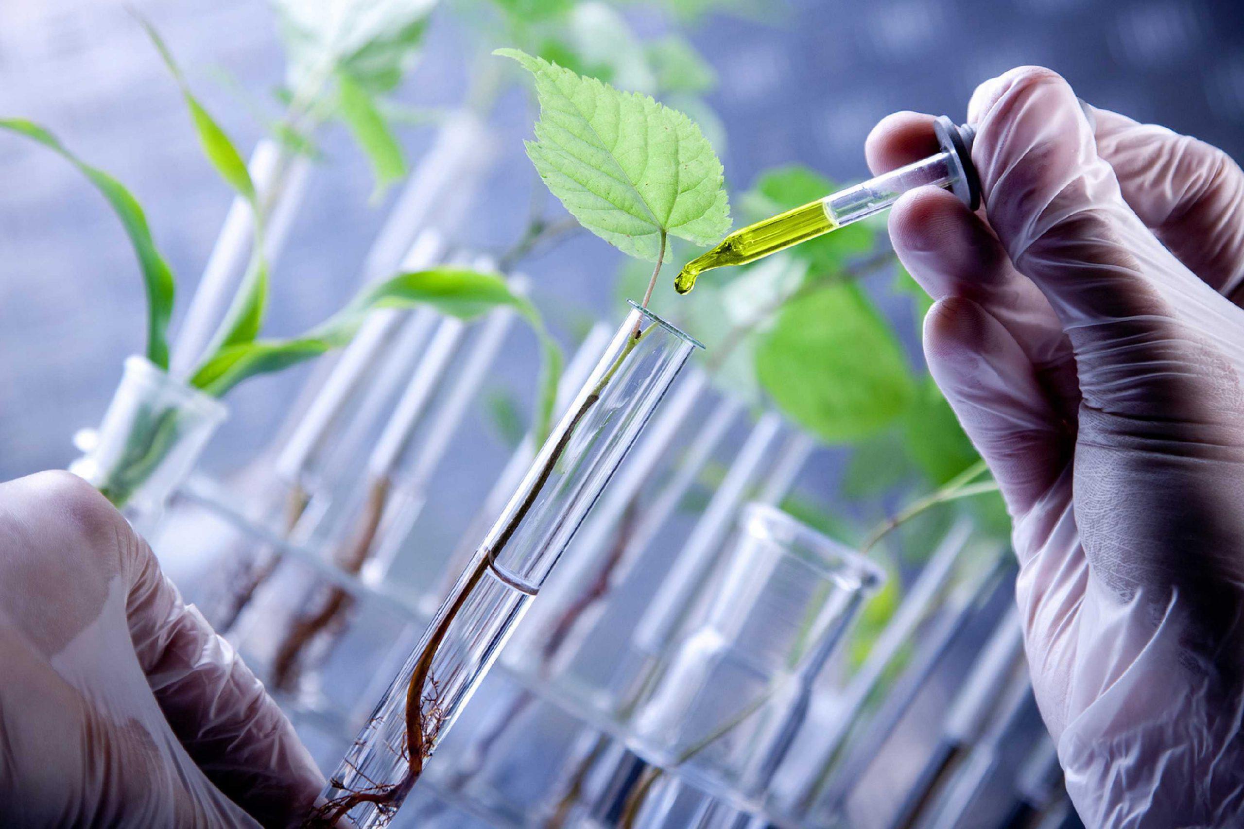 Economistas aseguran que uso de biotecnología en el sector agrario evitará la deforestación en el país