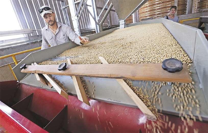 Agroindustriales se pronuncian en favor de la economía y rechazan acciones contra la biotecnología
