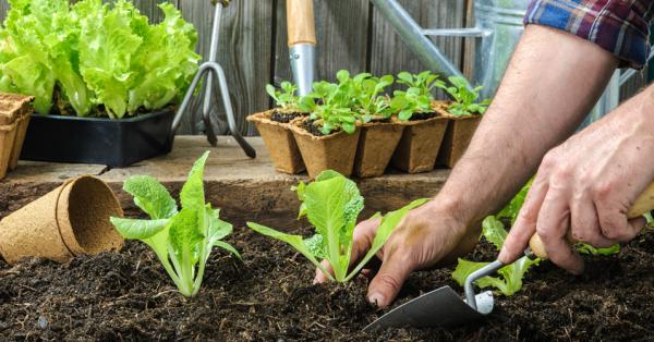 Programa Mundial de Alimentos apoyará la creación de huertos urbanos familiares en Sucre