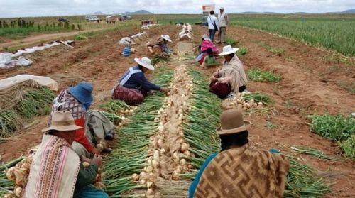 Plantean seis pilares para promover el desarrollo de la agricultura familiar en Bolivia