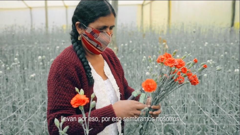Floricultura de Cochabamba no se rinde ante la pandemia