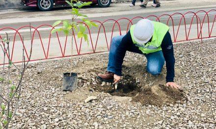 Embol apoya el Día Mundial del Agua con la siembra de árboles en Cochabamba
