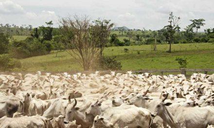 Ganaderos de la Chiquitania piden a Fegasacruz hacer gestiones para dejar sin efecto las restricciones a la exportación de carne