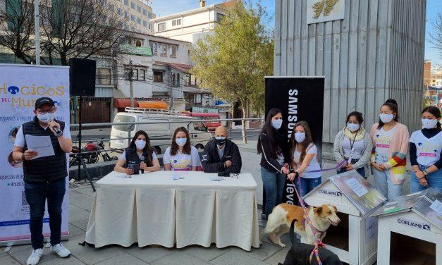 """Next Level construirá """"casitas"""" con material reciclado para los perros en situación de calle"""